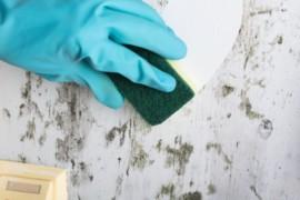 Come pulire la muffa con rimedi naturali