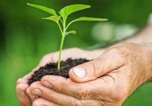 L'importanza della bioagricoltura per il nostro pianeta